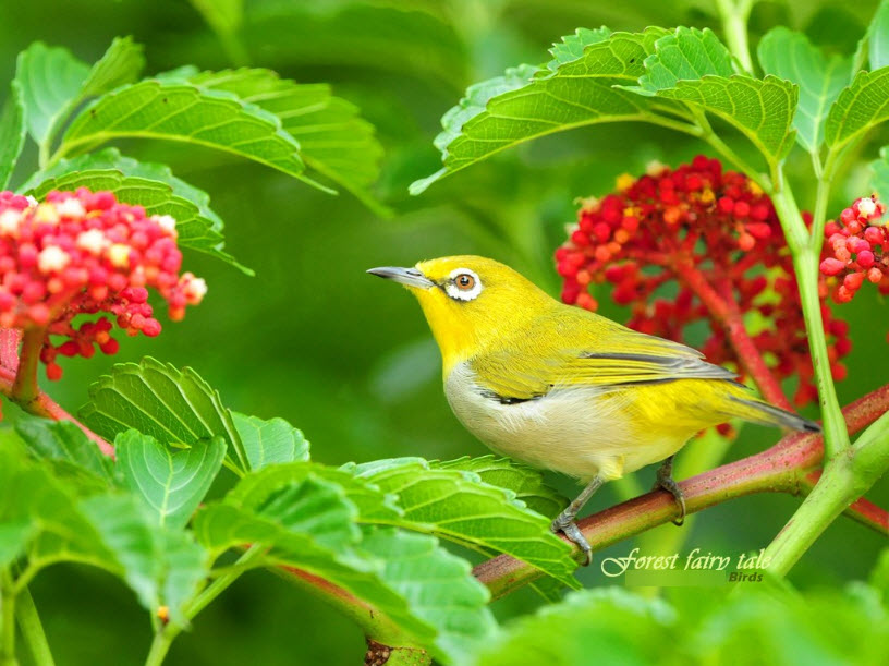 Nature  Beautiful Wallpaper Of Colorfulbirds  Tafreeh Mela