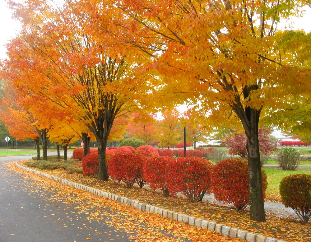 Autumn dry leaves wallpapers 2013 2014 itsmyideas great minds