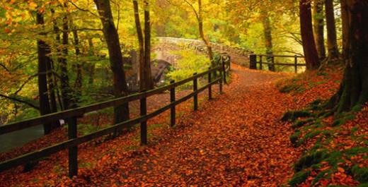 hd widescreen fall wallpaper - photo #28